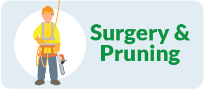 Tree Surgery and Pruning West London Tree Surgeons