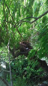 Tree Surgeon Near Me The Challenges of Tree Work in Spring