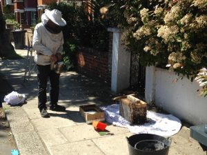 tree surgeon london removing a hive from ealing home