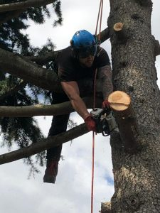 man cutting branch down Tom Boswell Tree Services
