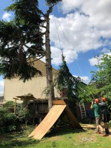 london tree care tom boswell tree services