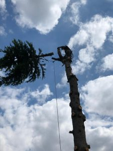 man cutting top branch down Tom Boswell Tree Services