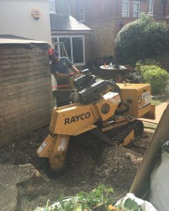 tree stump removal machine in london tom boswell