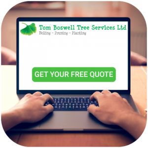 We provide free quotes for commercial tree work.