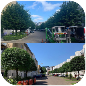 Finished commercial tree work in London.